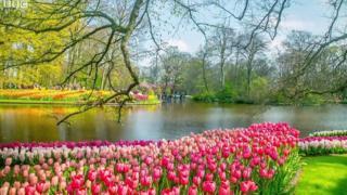Ботанічний сад Кекенхоф - один з найбільший у світі