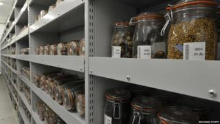 Seed vault at Millennium Seed Bank