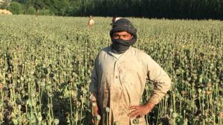 A poppy farmer