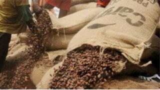 Les planteurs de cacao de Cote d'Ivoire sont en colère contre les dirigeants du Conseil du Café Cacao.