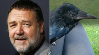 Russell Crowe and Russell Crow