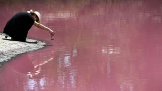 A woman crouches down near the edge of the pink lake to take a photo
