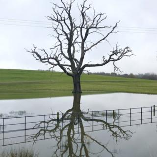 A tree reflected in water
