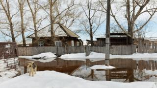 KHAKASSIA REPUBLIC, RUSSIA MARCH 28, 2018: A dog in a waterlogged street. In the village of Bely Yar.