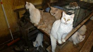 Cats in house. Pic: RSPCA