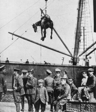 A horse is landed from a British military transport ship at Boulogne, France, during World War I, August 1914