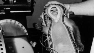 Los monos fueron utilizados para medir el impacto de las radiaciones de microondas.