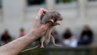 A pet rat is held in the air during a protest in the US