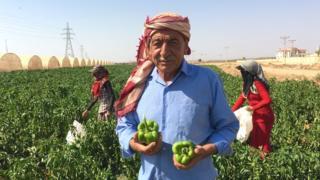 Jordanian farmer (in a red headscarf) in a pepper field