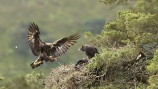 science Eagles