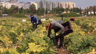 Trabalhadores tailandeses em fazenda em Israel