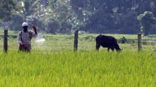 A Sri Lankan farmer sprays pesticides in a field