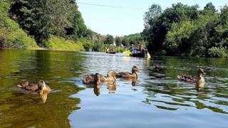 Ducks in Ironbridge