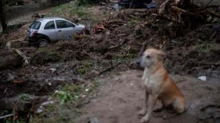 in_pictures A dog sits near a damaged car after heavy rains in the Taquara neighbourhood, suburbs of Rio de Janeiro, Brazil. Photo: 2 March 2020