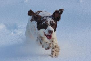 Dog running at Whitelees wind farm.