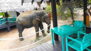 The Sri Lankan hotel where an elephant is a guest