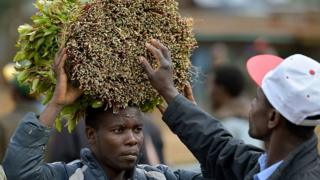 A khat farmer carries his khat harvest at a local open air market at Maua, in Meru county on September 9, 2016 in Kenya's central province
