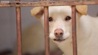 Ước tính có khoảng 15 triệu chú chó sống trên đường phố Ai Cập