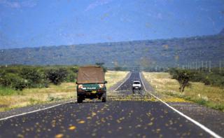 Locusts swarm across a highway