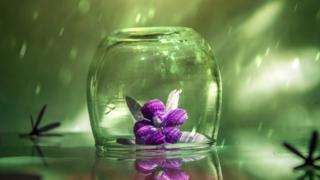 Flor atrapada en un vaso de vidrio con reflejos de luz