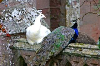 Birds at Scone palace