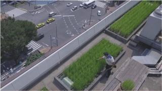 ဂျပန်က မြို့ပြစိုက်ခင်းတွေ