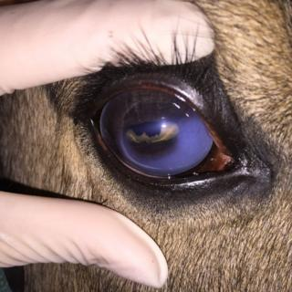 "Tanzin's ""greyed out"" eye"