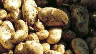 泽西皇家土豆(Jersey Royal Potatoes)