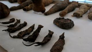 A line of mummified mice and falcons on display at the Tomb of Tutu, Sohag