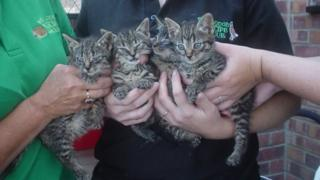 The four kittens