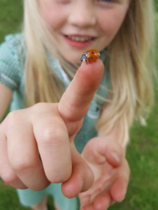 Girl holding a ladybird