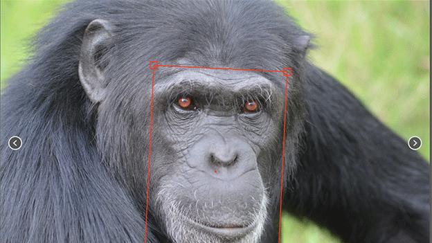 알고리즘은 기계 학습을 통해 약 3000여 개의 사진을 학습한 뒤 온라인 상을 돌아다니며 비슷한 사진들을 신고한다
