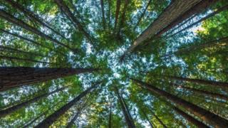 O que aconteceria se todas as árvores do mundo desaparecessem?