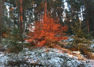 Huntly Bin forest