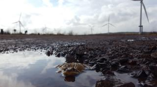 Toad at Whitelee wind farm