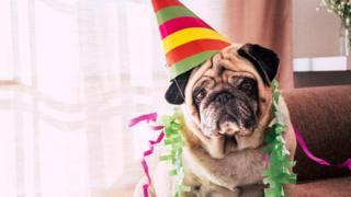 كيف تعرف العمر الحقيقي لكلبك؟