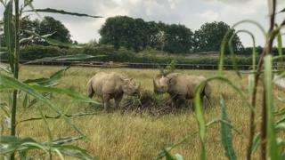 Eastern black rhinos Dakima and Nkosi
