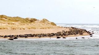 Seals at Ythan