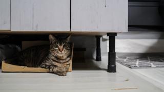 Oh ke-cheol's cat