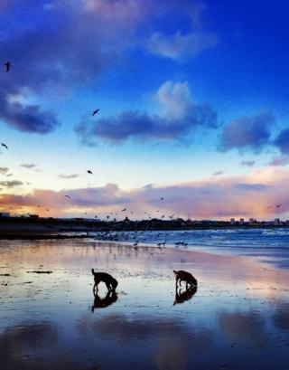 A shot of Footdee beach with 2 dogs and birds in the water