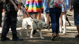 A dog sniffer dog at a music festival in Australia