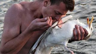 Man rescues seagull