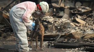 A rescue worker gives her cadaver dog water as they search the Paradise Gardens apartments for victims of the Camp Fire on November 16, 2018 in Paradise, California.