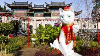 Китайцы, живущие в Кучинге, верят, что кошки приносят удачу