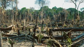 Undated image of deforestation in the Amazon rainforest, Brazil