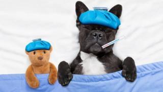 Perro enfermo junto a un peluche