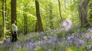 A woman enjoys the bluebell woodland