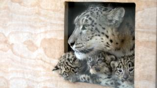 Cubs and mum