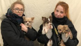 Staff with three chihuahaus