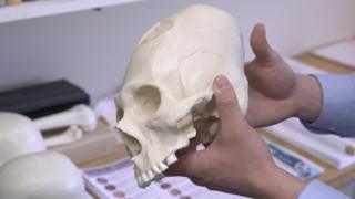 Cráneo cónico (Foto: Dan Chamberlain/Universidad Cornell)